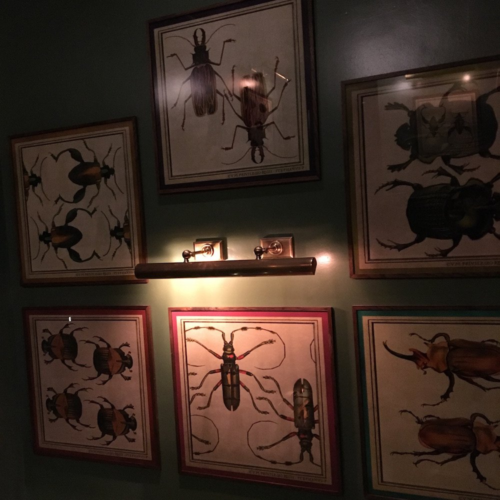 paintings of insects