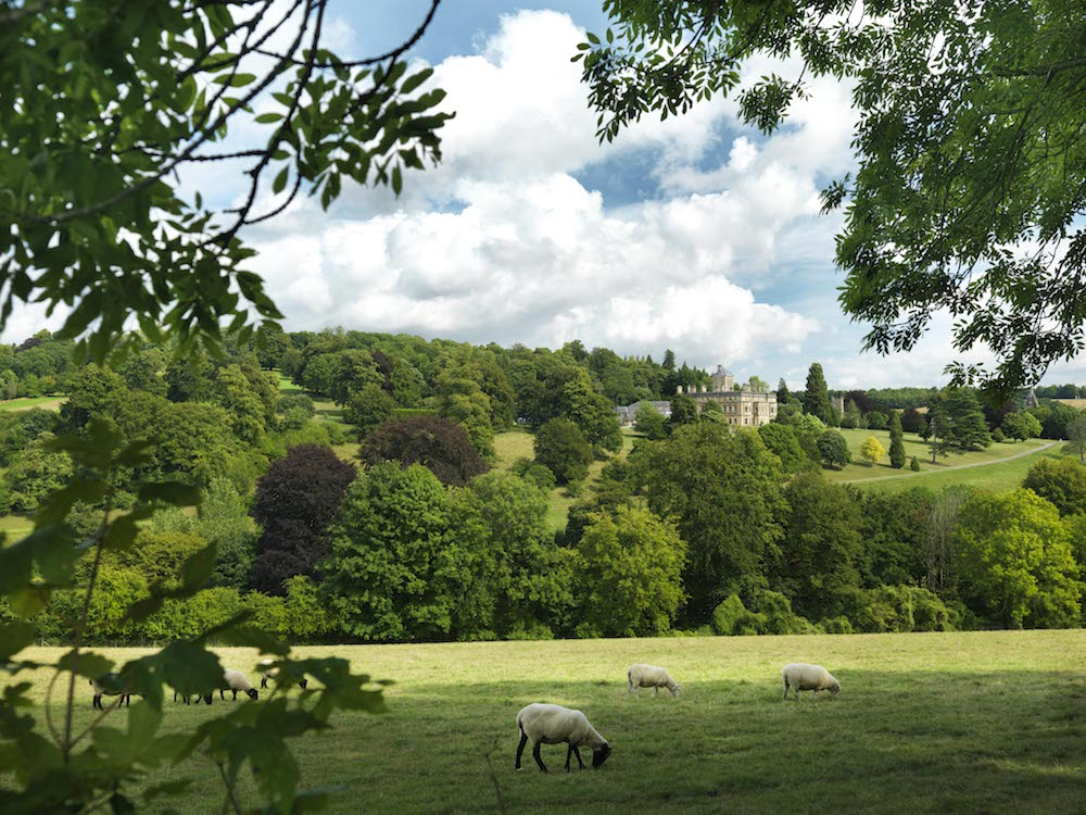 sheep in fields trees Rendcomb