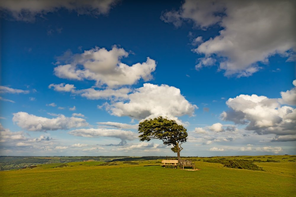 tree blown by wind benches grass blue sky clouds