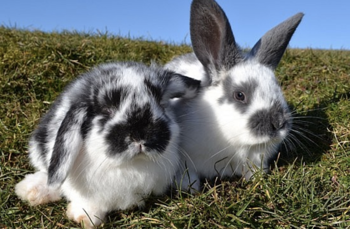 two cute bunnies rabbits