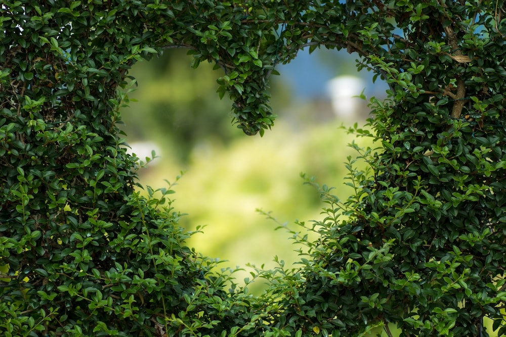 heart in a bush